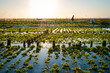 Algae farm field in Indonesia - 76754726
