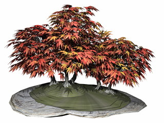 Japanese maple tree bonsai - 3D render