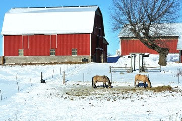 Two Horses and Barns