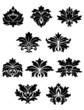 Lush black floral design elements