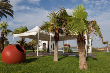 Tent in the meadow under the palm trees and red pot