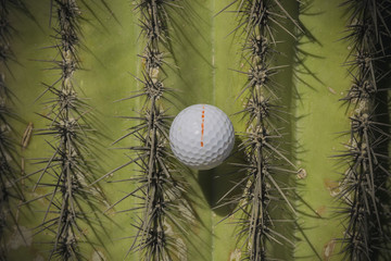 Golf ball stuck in Cactus tree spikes