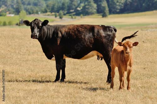 Cow Calf Poster