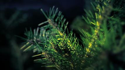 Christmas abstract tree pine