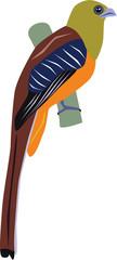elegant orange-breasted trogon vector