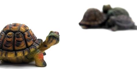 Tortugas de porcelana