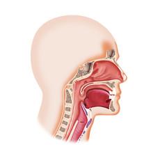 Larynx system