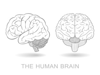 Human brain in two perspectives. EPS8 only