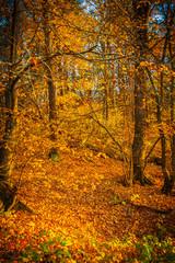 deep forest in autumn instagram stile