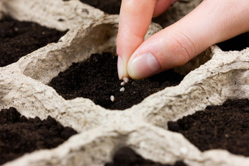 woman hand planting seed in the ground. spring sowing.