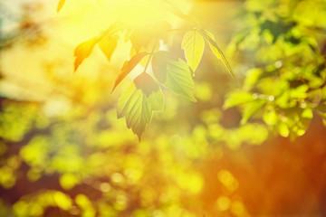 sun translucent through leaves of a tree instagram stile