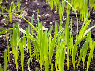 Grass and Ground