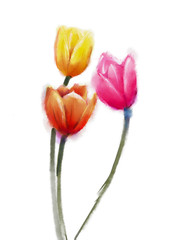 Colorful Tulips flowers-Watercolor painting