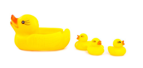 four ducks rubber on a white background