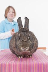 Junge mit Kaninchen, lächelnd