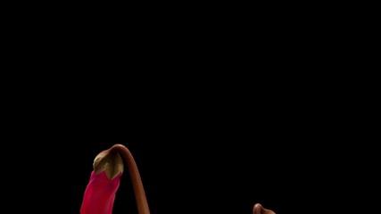 Cyclamen Flower Time-lapse
