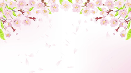 Falling petals on the Cherry Blossom arch frame