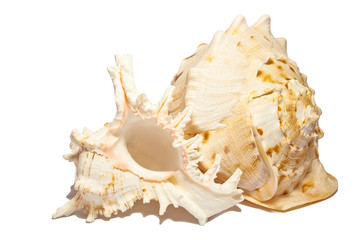Empty sea shells isolated on white.