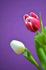 buntes Frühlinserwachen