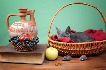Cat resting in a wicker basket