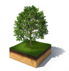3d illustration of section of ground with tree isolated on white