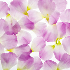flowers background petals