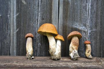 orange-cap boletus mushrooms