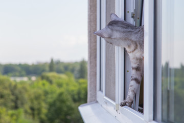 cat peeking out of the window