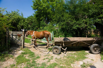 brown horse with cart