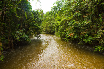 Jungle river in borneo
