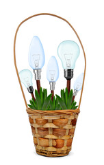 Light bulbs on plant in pot isolated on white