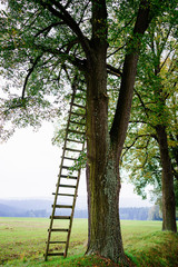 Wooden ladder leaning against tree