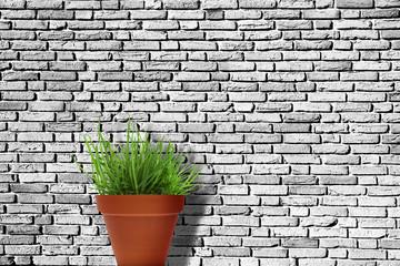 Ziegelwand mit Topfpflanze