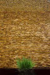 Alte Ziegelwand mit Grasbüschel