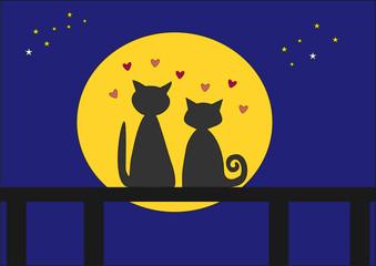 Cat's romance