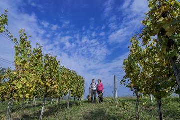Senior couple in the vineyard