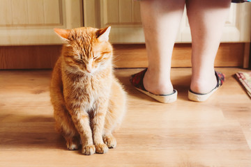 Red Cat Sitting Near Female Foots