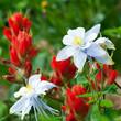 Wildflowers Blooming in Colorado Summer
