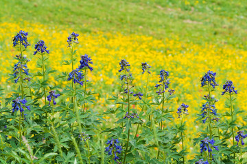 Purple and Yellow Wild Flowers