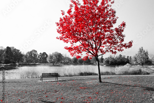 Leinwandbild Motiv Red Tree Over Park Bench