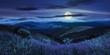 Leinwandbild Motiv wild flowers on the mountain top at night