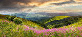 Fototapety wild flowers on the mountain top