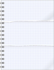 teared pages of notebook