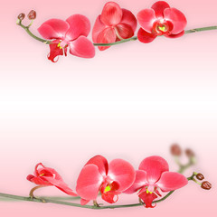 Beautiful floral abstract background, isolated orchids