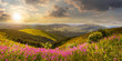 Leinwandbild Motiv wild flowers on the mountain top at sunset
