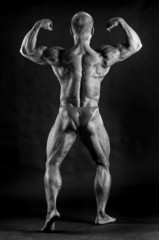 The muscular male bodybuilder flexing