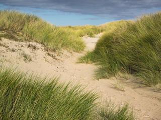 sand path through dune grass