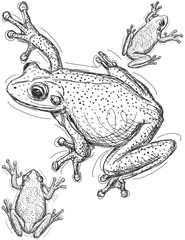 Frog sketches