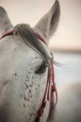 horse with red harness
