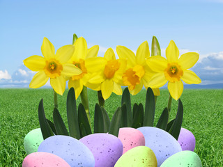 real easter eggs and daffodils grass and sky background
